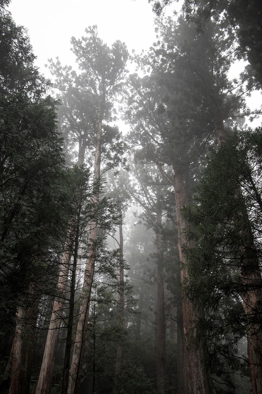 Photographie des forêts du Japon