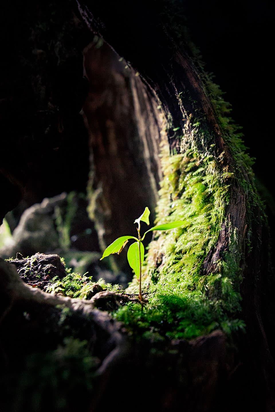 Photo macro de plante